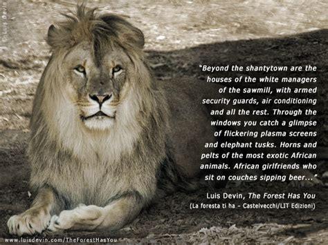leo  lion quotes quotesgram