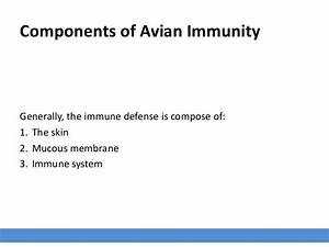 Introduction To Avian Immunity