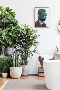 Minimalist, Home, With, Indoor, Plant, U2013, Decoredo