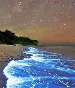Etoile De Mer Dofus : mer d 39 toile de l 39 le vaadooh maldives voyages pinterest sea of stars places et maldives ~ Medecine-chirurgie-esthetiques.com Avis de Voitures