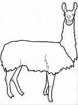 Llama Coloring Pages Lama Clipart Drawing Animal Alpaca Printable Cartoon Pajama Adult Clipartmag Guinea Pig Clip Getcolorings Head Astounding sketch template