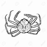 Crab Outline King Drawing Vector Drawn Getdrawings Royalty Hand sketch template