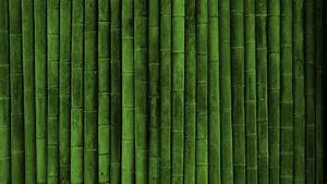 HD Bamboo Plant Wallpapers
