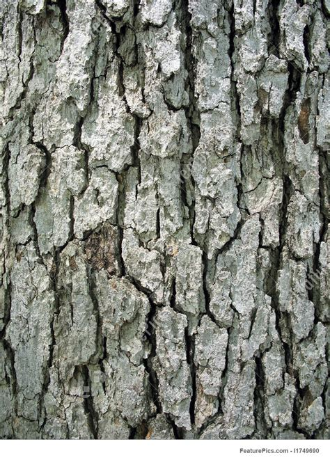 texture tree bark stock image   featurepics