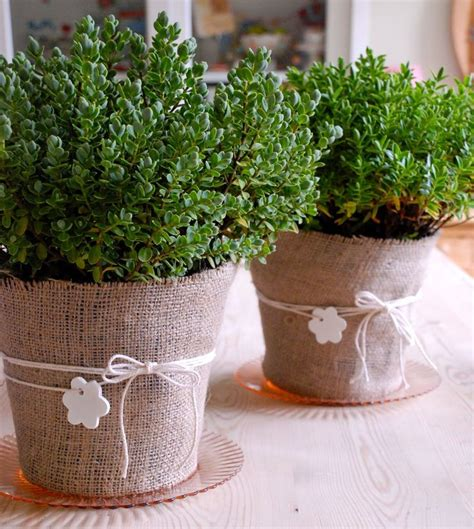 cheap pots for plants 17 best ideas about plastic plant pots on harvesting tools plastic pots and easy
