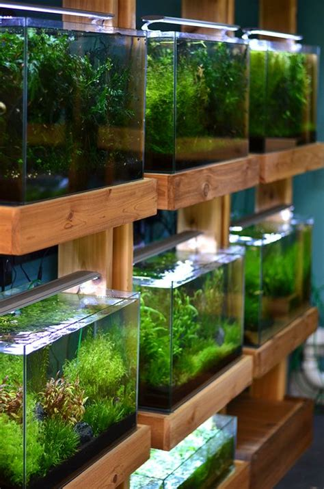 Aquascape Store by Aquarium Zen Seattle Fish Store Aquariums Aquascape