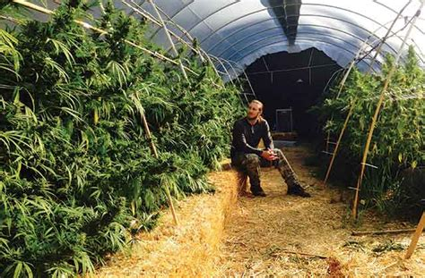 light dep greenhouse the secrets of light deprivation for greenhouses high times