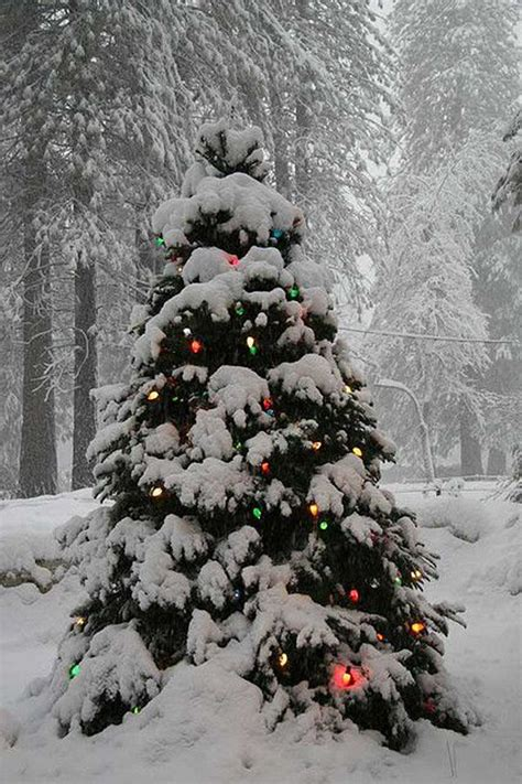 outdoor weihnachtsbaum 28 images tree decoration ideas