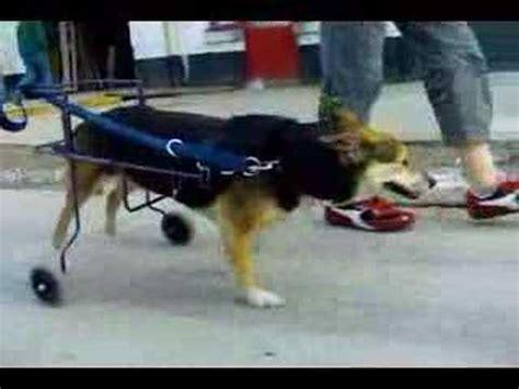 chaise roulante pour handicape chaise roulante pour chien paralys 233