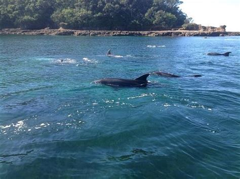 Glass Bottom Boat Tours Leigh by Glass Bottom Boat Tours Kayak Snorkel Hire Leigh