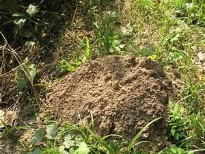 Moles for Garden moles