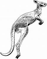 Kangaroo Drawing Pages Coloring Animals Clipart Jumping Printable Library Cliparts Getdrawings Clipartmag Clip sketch template