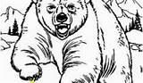 Cave Coloring Bear 2155 Divyajanani Tablet sketch template