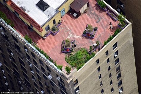 plant shed nyc secret sky gardens of new york city revealed in stunning