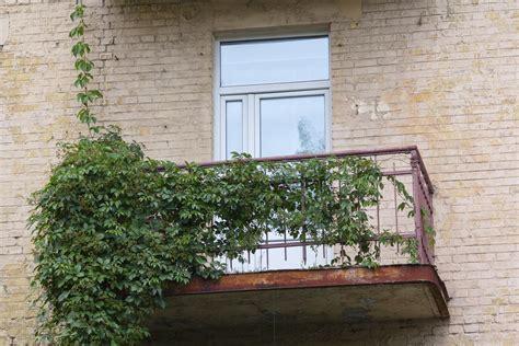 Sichtschutz Mit Blumenkasten by Balkonkasten Bepflanzen 187 Pflanzen Als Sichtschutz