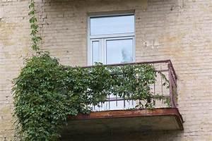 Sichtschutz Zum Bepflanzen : sichtschutz zum bepflanzen schick bambus sichtschutz auf gamelog wohndesign ~ Sanjose-hotels-ca.com Haus und Dekorationen
