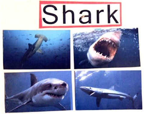 brilliant bundles shark crafts and activities for a 111 | sharks