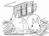 Coloring Hutch Bunnies Polish Rabbit Pages Rabbits Country Seasonal Creative Smarties sketch template