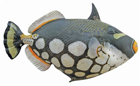 fish  great map