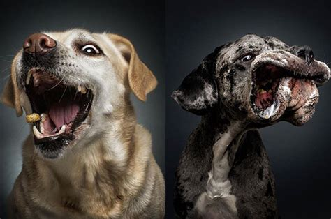photographer captures hilarious expressions  dogs