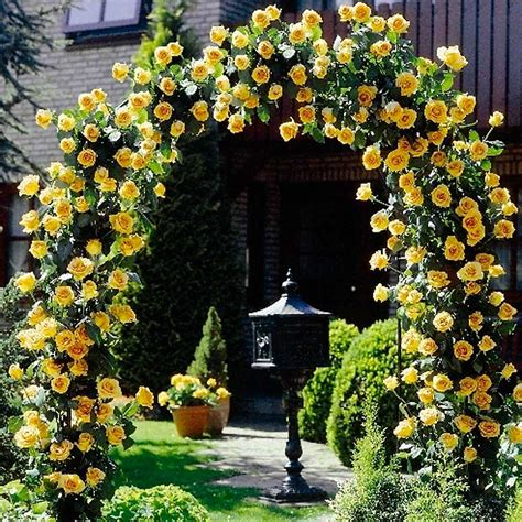 summer flowering climbers which climbing roses bloom all summer orchid flowers