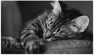 Black And White Cat Photography Sleeping