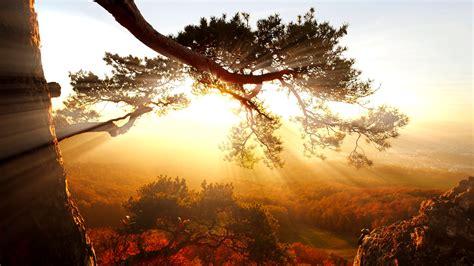 tree of life silhouette background at sunset. sunbeam ...