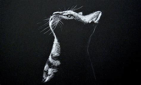 drawing  cat white  black paper time lapse hildur