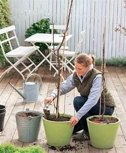 Tulpenzwiebeln Im Topf Pflanzen : s ulenobst pflanzen und pflegen mein sch ner garten ~ Lizthompson.info Haus und Dekorationen