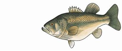 Fish Animated Gifs Animado Swallowing Cargocollective Gifer