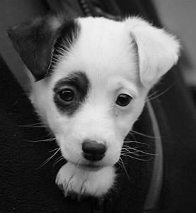 bonjour je suis un petit chien très adorable et très ...