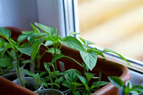 How To Grow Vegetables Indoors When It's Cold Outside