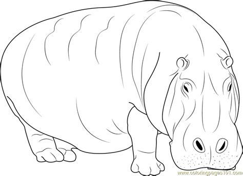 adult hippopotamus coloring page  hippopotamus