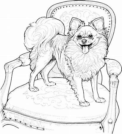 Coloring Dog Pages Pomeranian Breed Adults Papillon