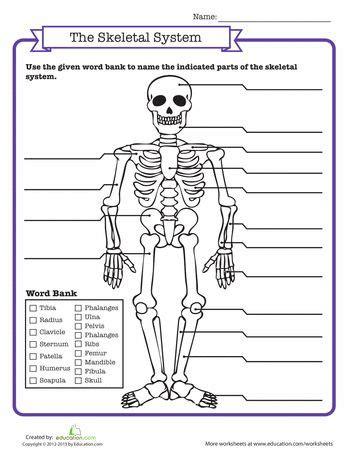 skeletal system worksheet 21 best images about skeletal system on lungs