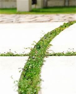 1,000 件以上の 「小さな庭」のおしゃれアイデアまとめ|Pinterest