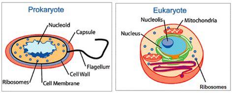 Plan Diagrams Tissue Organ Prokaryotic