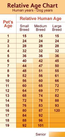 calculate  dogs age general dog tips info
