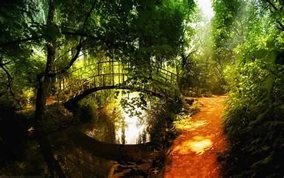 Nature Widescreen Wallpapers Desktop Backgrounds Background Forest