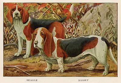 Bench Beagle by Quot Bench Legged Beagles Quot