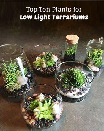 top ten  light terrarium plants pistils nursery