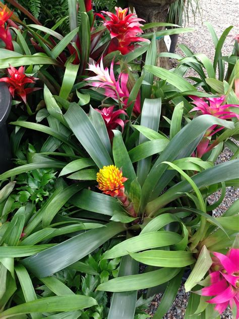 179 Best Images About Tropical Plants Full Sun On