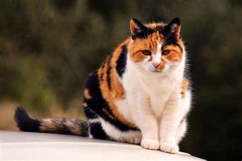 gambar kucing anggora warna warni
