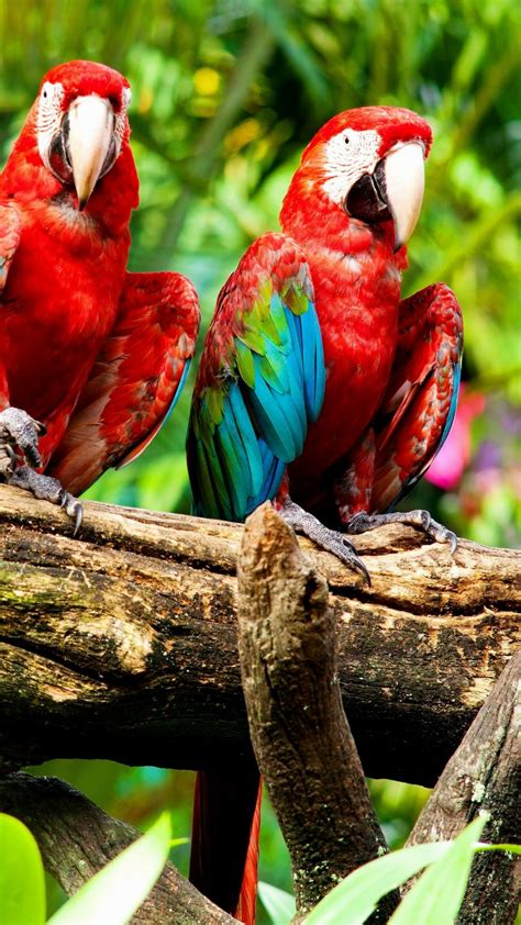 Enjoy the richness of the beauty and colors. Beautiful Wallpaper Android HD wallpaper Beautiful Birds 1080x1920 Exotic Birds - Supportive Guru