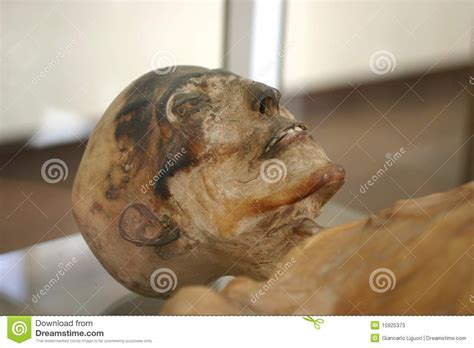 skeleton mummy editorial stock photo image