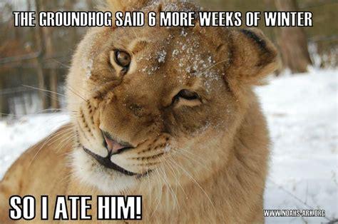 Groundhog Memes - 17 best images about noah s ark on pinterest leo lion golden tiger and tiger lilies