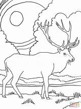 Elk Coloring Pages Mountain Printable Rocky Scenery Mountains Drawing Deer Adult Bull Supercoloring Template Coloringhome Drawn Simple Sheets Wapiti Head sketch template