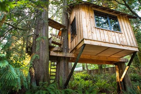Why Not A Tree House?-home Construction