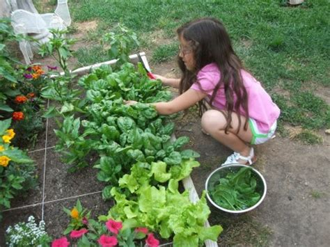 caring for trees gardening with kids 6 care of plants