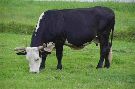 Atypical Bse Confirmed In Florida Cow